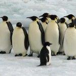 Más datos sobre Google Penguin y el SEO