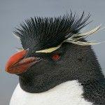 SEO para Penguin, el nuevo posicionamiento web
